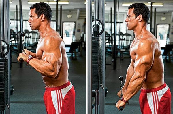 کرت سیم کش برای عضلات بازو در مبتدی ها