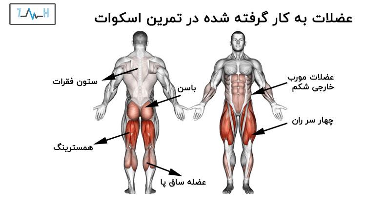 عضلات درگیر در اسکوات با اناتومی بدن